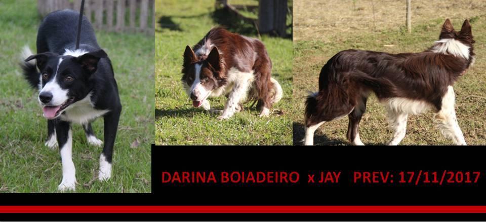 DARINA BOIADEIRO x JAY PREV 17-11-2017