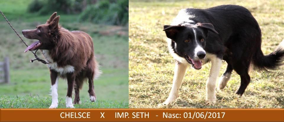 M Chelsce x Seth 01-06-2017