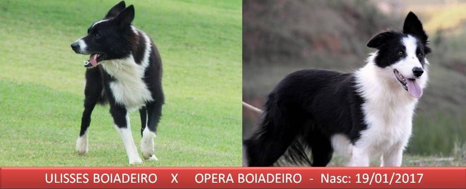 Opera x Ulisses 19-01-2017 - Copia