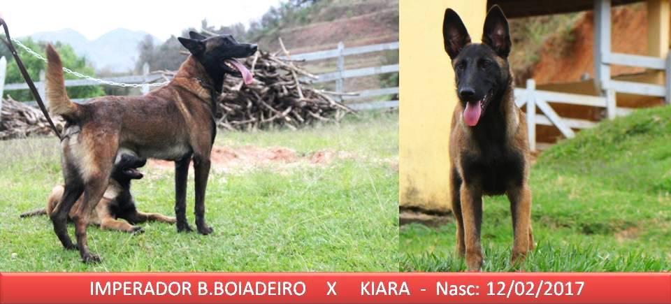 Kiara x Imperador Nasc 12-02-2017