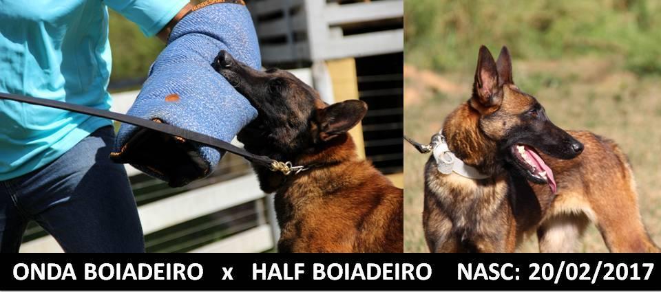 ONDA BOIADEIRO x HALF BOIADEIRO NASC 20-02-2017